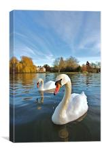 River Thames Swans, Canvas Print