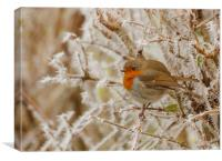 Robin on frosty bush, Canvas Print