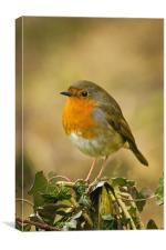 Robin Standing On A Post, Canvas Print