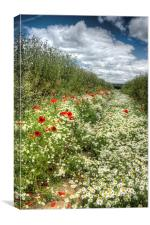 Camomile And Poppy Path, Canvas Print
