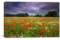 Poppy Field2, Canvas Print
