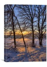 Golden Winter Sunrise, Canvas Print