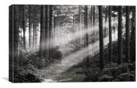 Morning Rays, Canvas Print