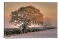 Winter Morning, Canvas Print