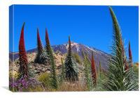 Mt Teide, Canvas Print