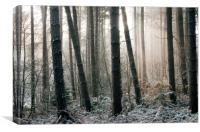 Woodland Light, Canvas Print