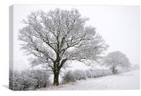 Snowy Trees, Canvas Print
