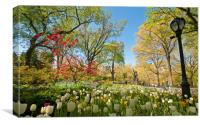 Spring in Central Park, Canvas Print