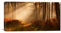 Morning Light II, Canvas Print