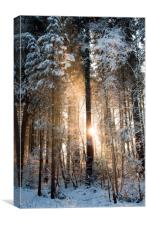 Eruption of Light , Canvas Print