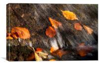 Autumn  , Canvas Print