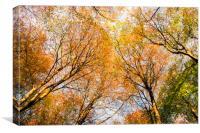 Autumn Colours , Canvas Print