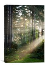 Woodland Light , Canvas Print