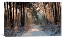 Warm Winter Wonderland , Canvas Print