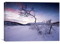 Frozen in the Twilight , Canvas Print