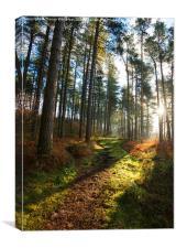 Woodland Path , Canvas Print