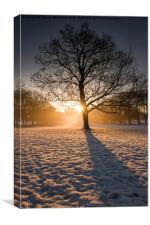 Winter Light & Shadows , Canvas Print
