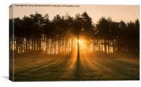 Morning Light , Canvas Print