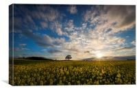 Rapeseed Sunset , Canvas Print