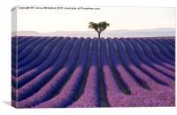 Lavender , Canvas Print