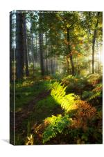 Autumn Morning I, Canvas Print