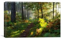 Autumn Morning II , Canvas Print