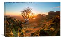 The Quiraing Tree, Canvas Print