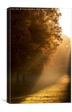 Autumn Light , Canvas Print