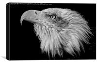 American Bald Eagle (Haliaeetus leucocephalus), Canvas Print