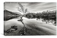 Llyn Padarn The Lone Tree, Canvas Print