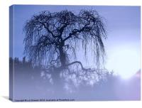Weeping Ash Silhouette, Canvas Print