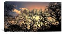 Treebutary, Canvas Print
