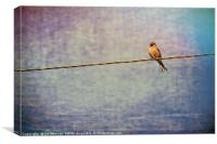 Single Bird Caught a Worm - Artsy Style, Canvas Print