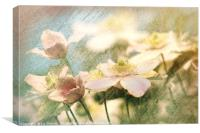 Clematis Pinks and Blues - artsy style, Canvas Print