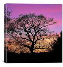 Tree Silhouette At Sunset, Canvas Print