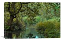 River Wey view, Canvas Print