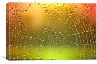 Spider Web Dew Drops   [ Enhanced], Canvas Print