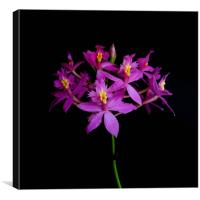 Pink Orchids, Canvas Print