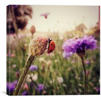 In The Meadow, Canvas Print