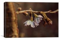 Winter Blossom, Canvas Print