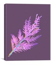 Cypress leaves in my garden, Canvas Print