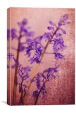 Bluebells 2, Canvas Print