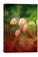 Pink flowers!!!, Canvas Print