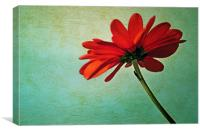 Red daisy, Canvas Print