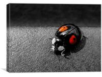 Black Ladybird with Red Spots, Canvas Print