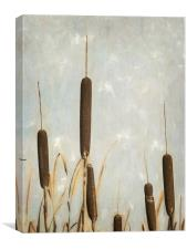 Rushes, Canvas Print