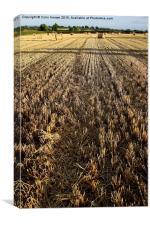 Hay Bail Farming, Canvas Print
