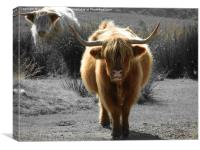 highland cow faceoff, Canvas Print