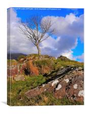 RHYD DDU LONE TREE, Canvas Print