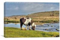 Dartmoor Pony At Cadover Bridge, Canvas Print
